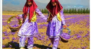 صادرات زعفران در جهان
